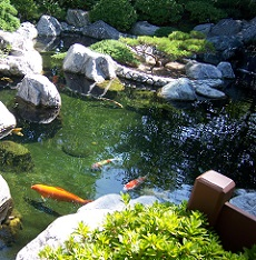 this is a picture of a pond at a tea garden